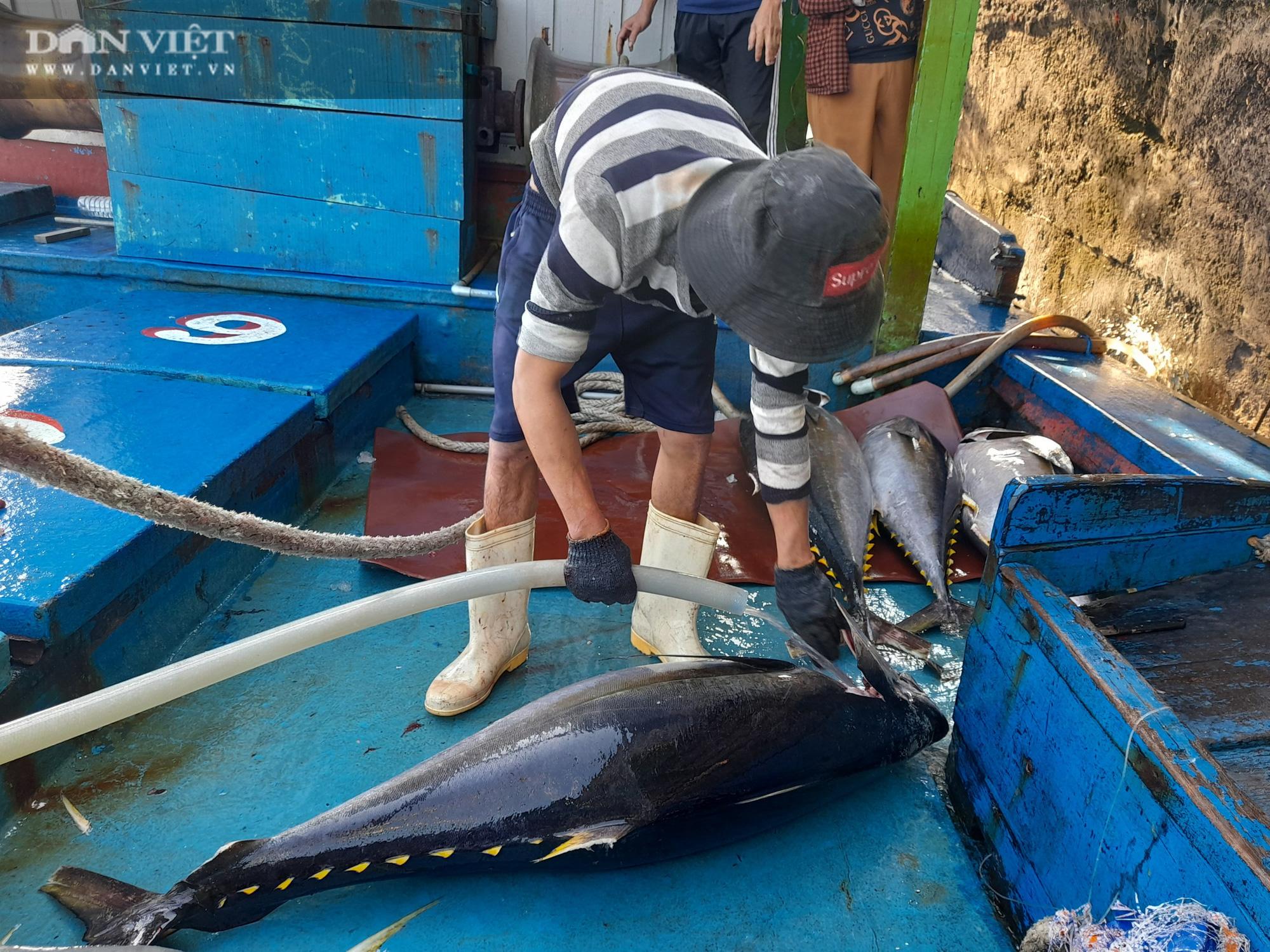 Cận cảnh đưa cá ngừ đại dương về bờ sau chuyến biển xuyên Tết - Ảnh 1.