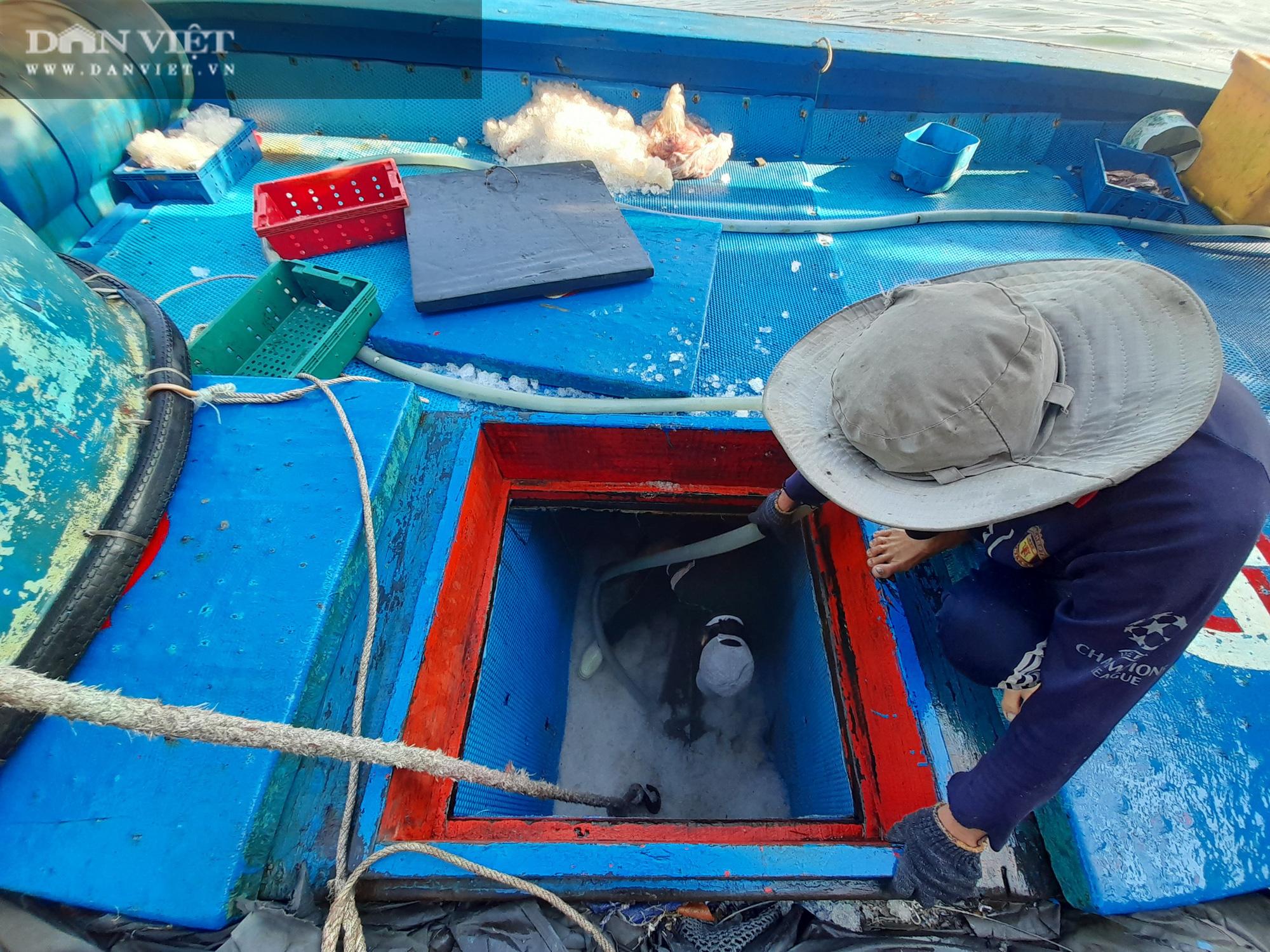 Cận cảnh đưa cá ngừ đại dương về bờ sau chuyến biển xuyên Tết - Ảnh 2.