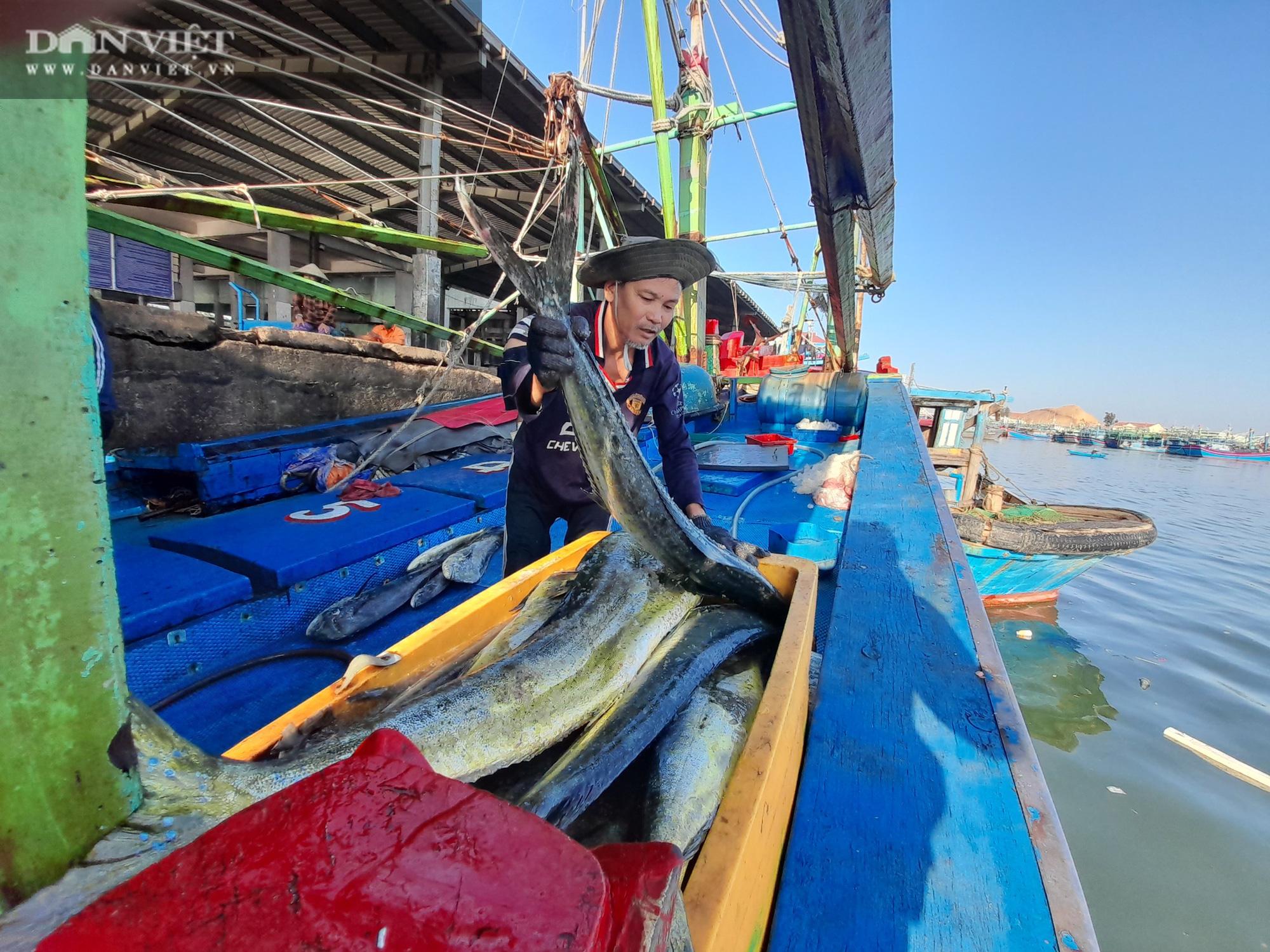 Cận cảnh đưa cá ngừ đại dương về bờ sau chuyến biển xuyên Tết - Ảnh 3.