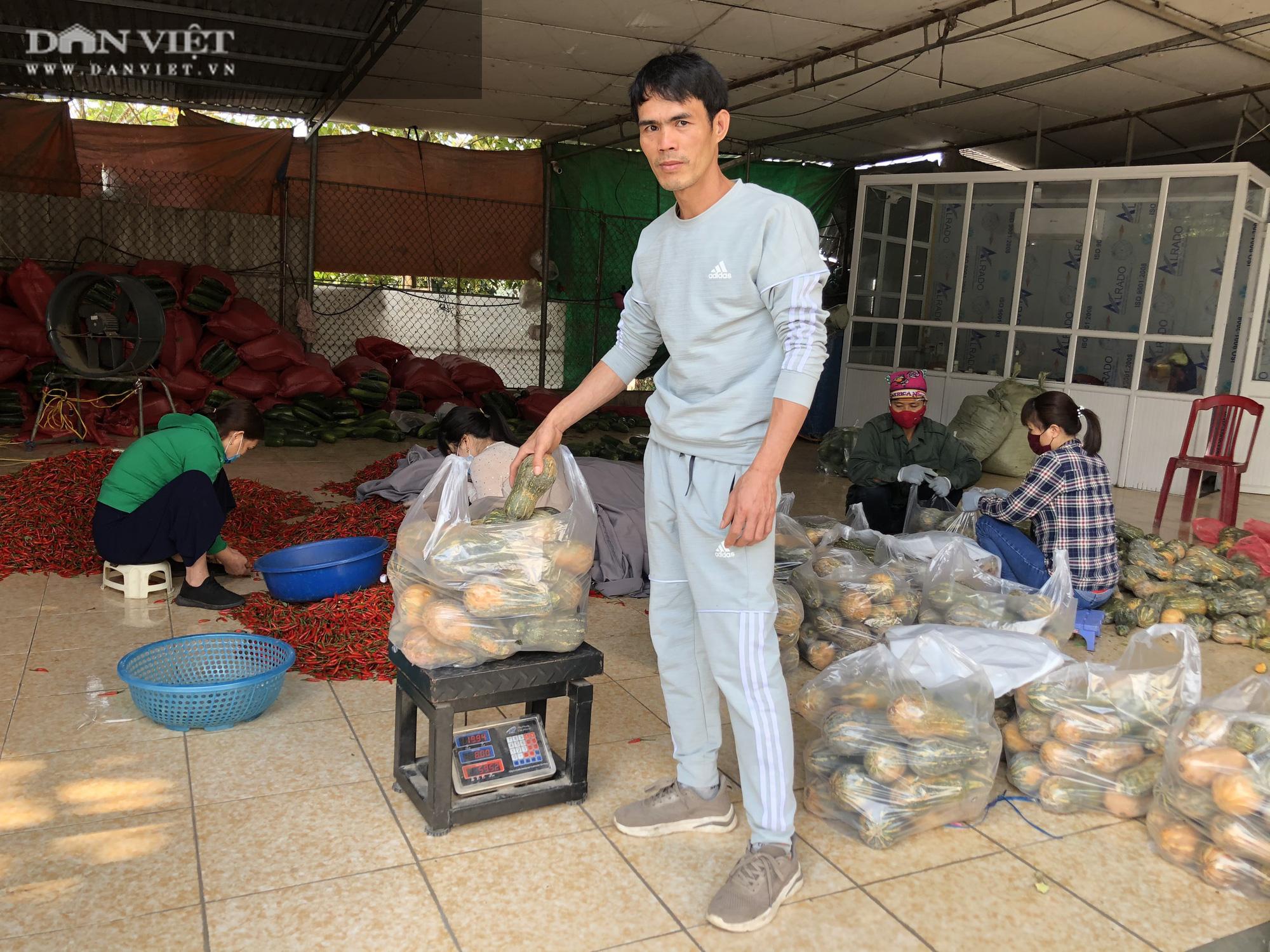 Thái Bình: Rau rẻ như cho, chỉ 8.000 nghìn đồng/15 củ su hào, nông dân chán nản cắt về làm thức ăn cho bò - Ảnh 3.