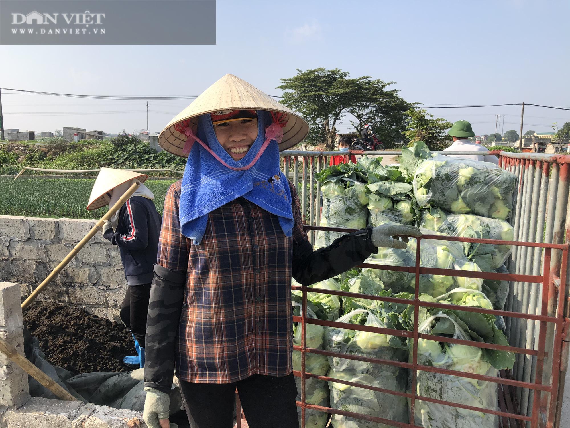 Thái Bình: Rau rẻ như cho, chỉ 8.000 nghìn đồng/15 củ su hào, nông dân chán nản cắt về làm thức ăn cho bò - Ảnh 1.