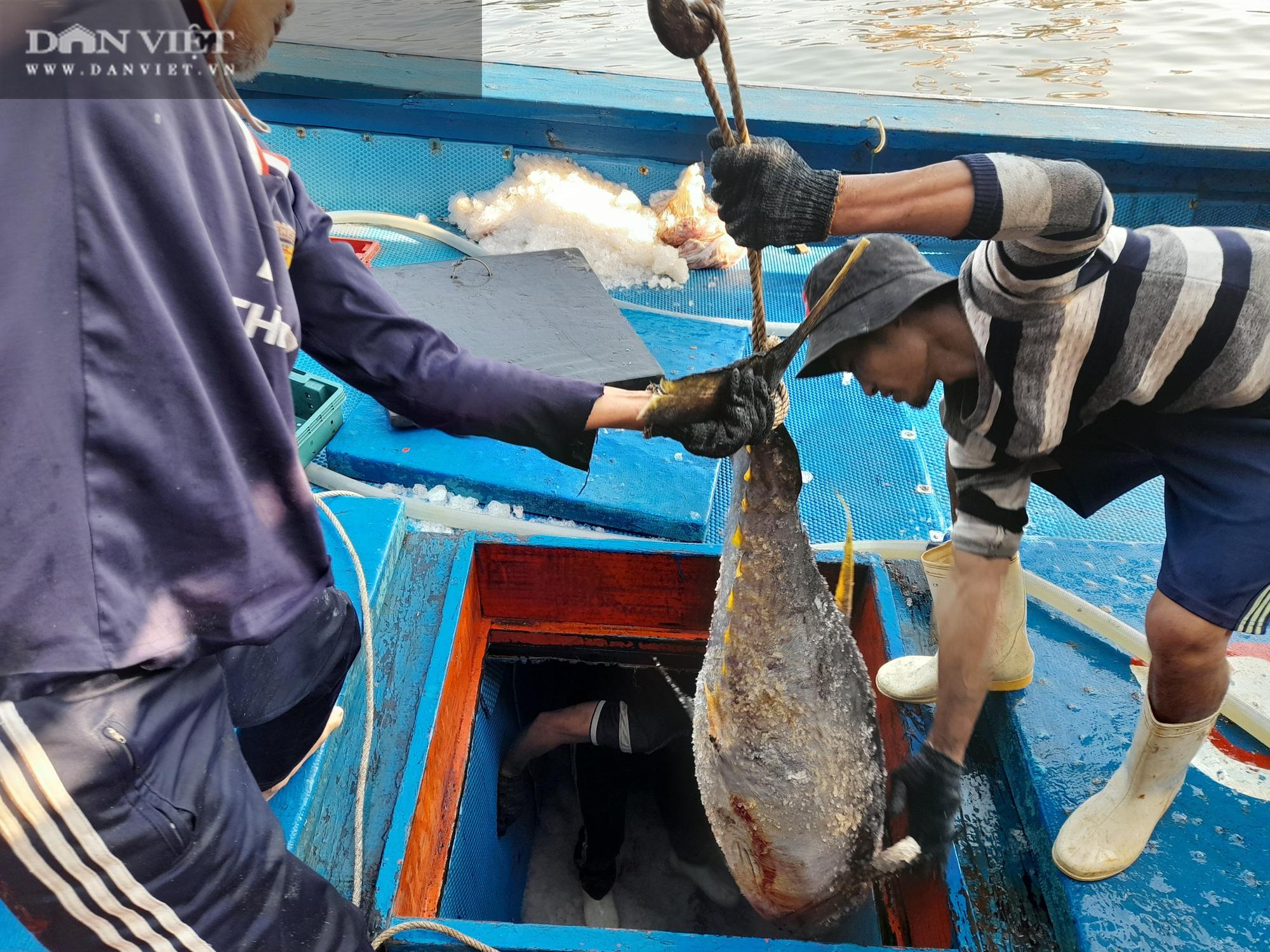 Cận cảnh đưa cá ngừ đại dương về bờ sau chuyến biển xuyên Tết - Ảnh 13.