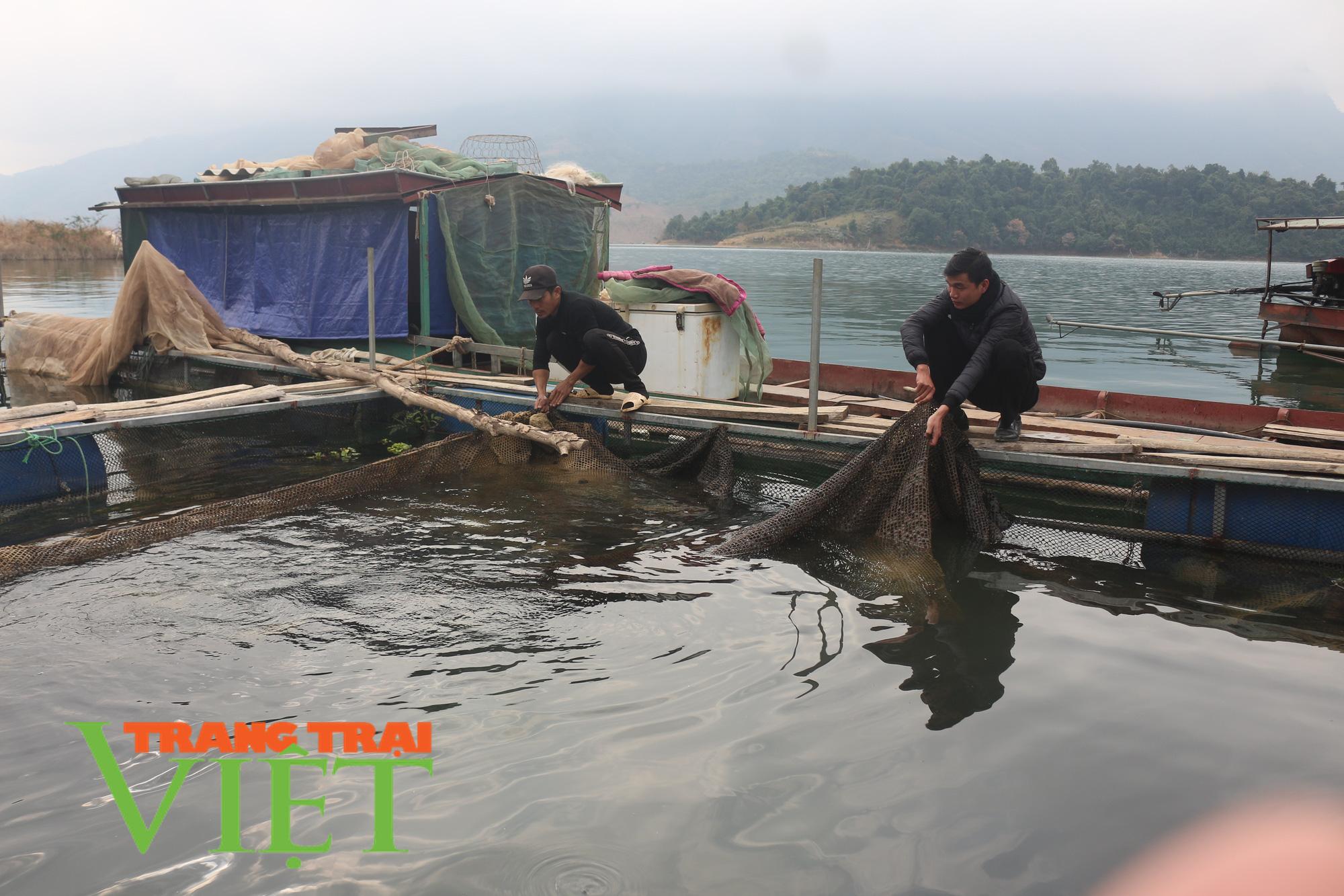 Bỏ núi xuống sông, những lão nông đổi đời từ nuôi cá lồng - Ảnh 2.
