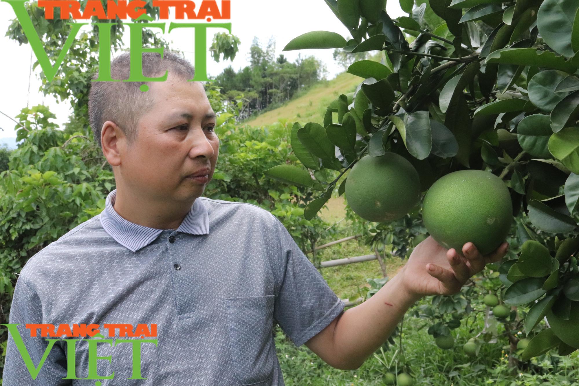 Hội Nông dân Sơn La: Làm tốt các hoạt động dịch vụ, tư vấn, dạy nghề, hỗ trợ nông dân - Ảnh 3.