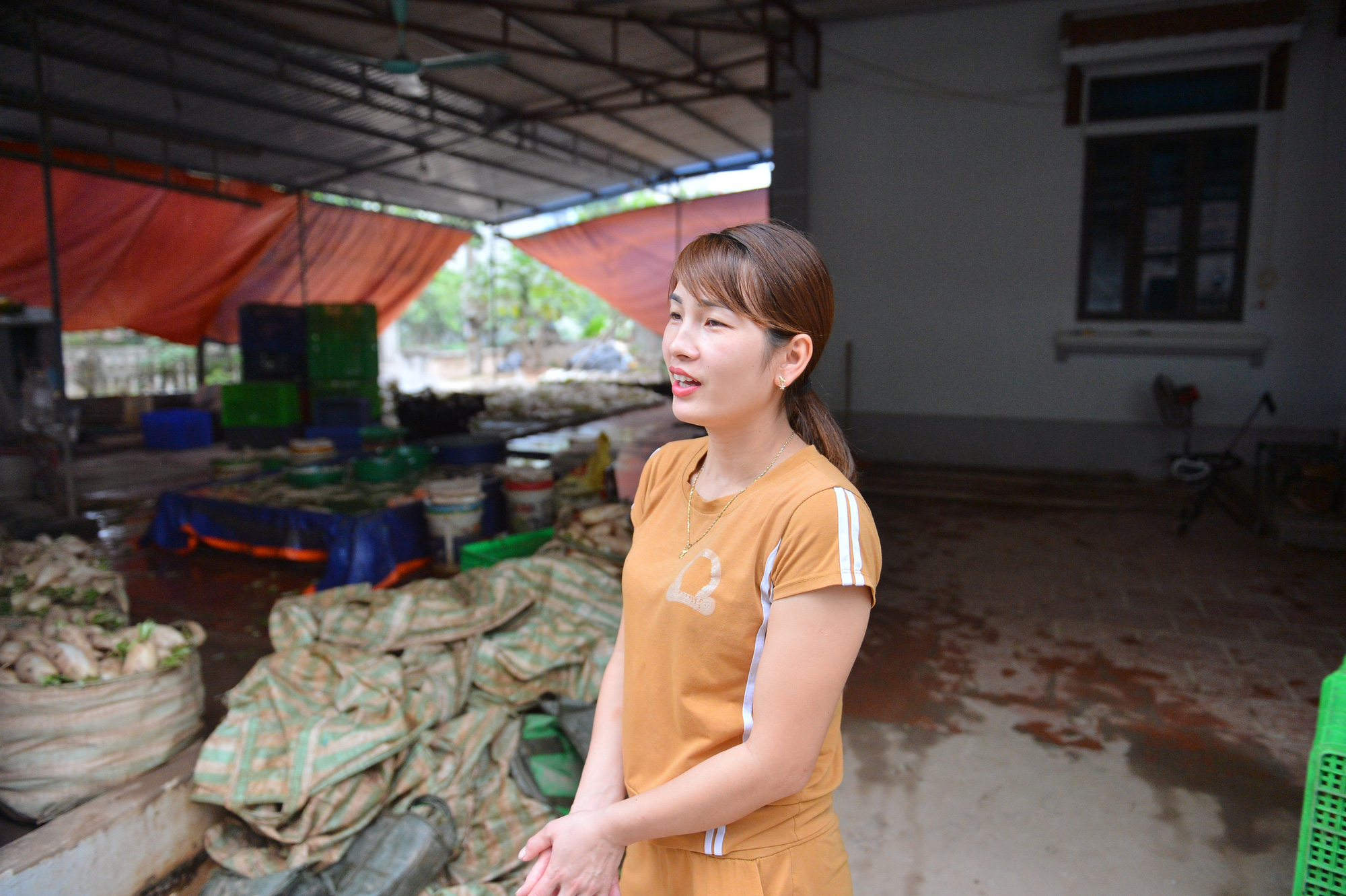 Sau Hải Dương, hàng trăm tấn củ cải ở Hà Nội rớt giá, người dân phải nhổ bỏ vì bán không ai mua - Ảnh 14.
