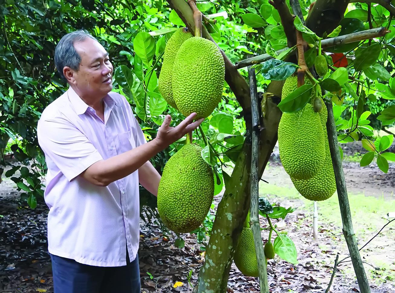 Tây Ninh: Nghe các nông dân phú tiết lộ bí quyết trồng mít Thái ra trái quanh năm, thu tiền tỷ - Ảnh 1.