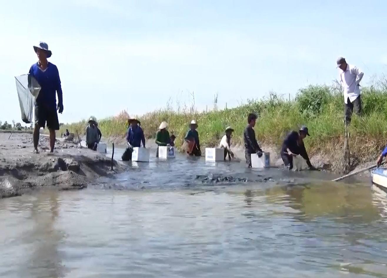 Trúng đậm vụ mùa tôm càng xanh, nông dân Kiên Giang phấn khởi vì biết áp dụng thay đổi vật nuôi - Ảnh 2.