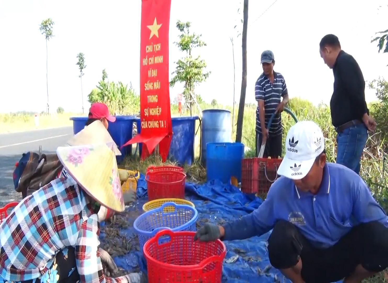 Trúng đậm vụ mùa tôm càng xanh, nông dân Kiên Giang phấn khởi vì biết áp dụng thay đổi vật nuôi - Ảnh 6.