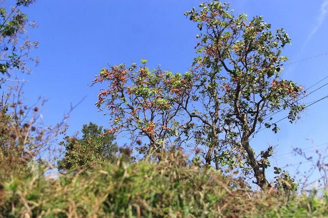 Ngắm loài hoa 'độc nhất vô nhị' ở Tây Nguyên - Ảnh 1.