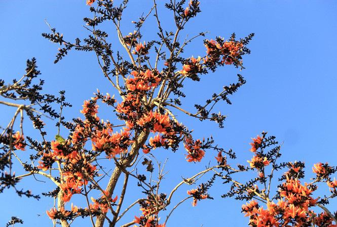 Ngắm loài hoa 'độc nhất vô nhị' ở Tây Nguyên - Ảnh 2.