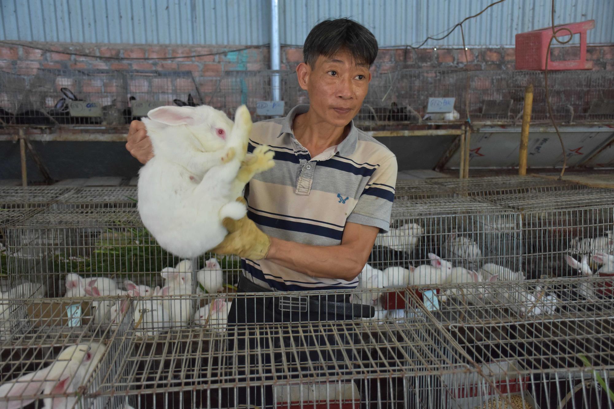 Lão nông chân đất mày mò nuôi giống thỏ Úc, thu nửa tỷ đồng/năm - Ảnh 3.