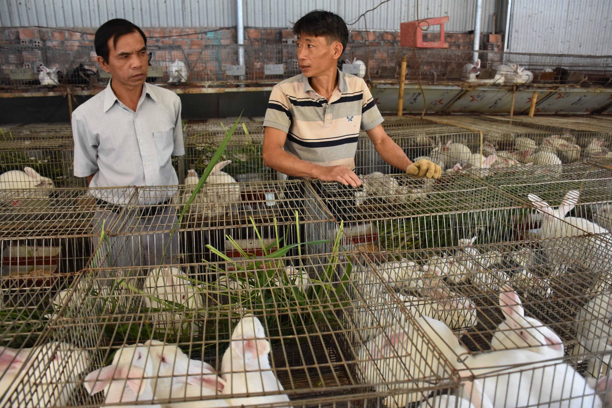 Lão nông chân đất mày mò nuôi giống thỏ Úc, thu nửa tỷ đồng/năm - Ảnh 4.