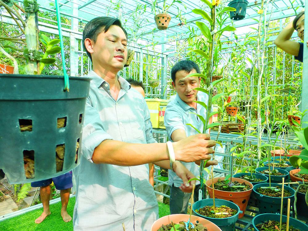 Hoa lan phi điệp đột biến 5 cánh trắng Phú Thọ trong vườn lan rừng của chàng trai An Giang, ai xem cũng trầm trồ - Ảnh 4.