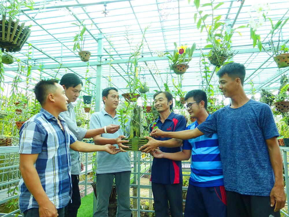 Hoa lan phi điệp đột biến 5 cánh trắng Phú Thọ trong vườn lan rừng của chàng trai An Giang, ai xem cũng trầm trồ - Ảnh 3.