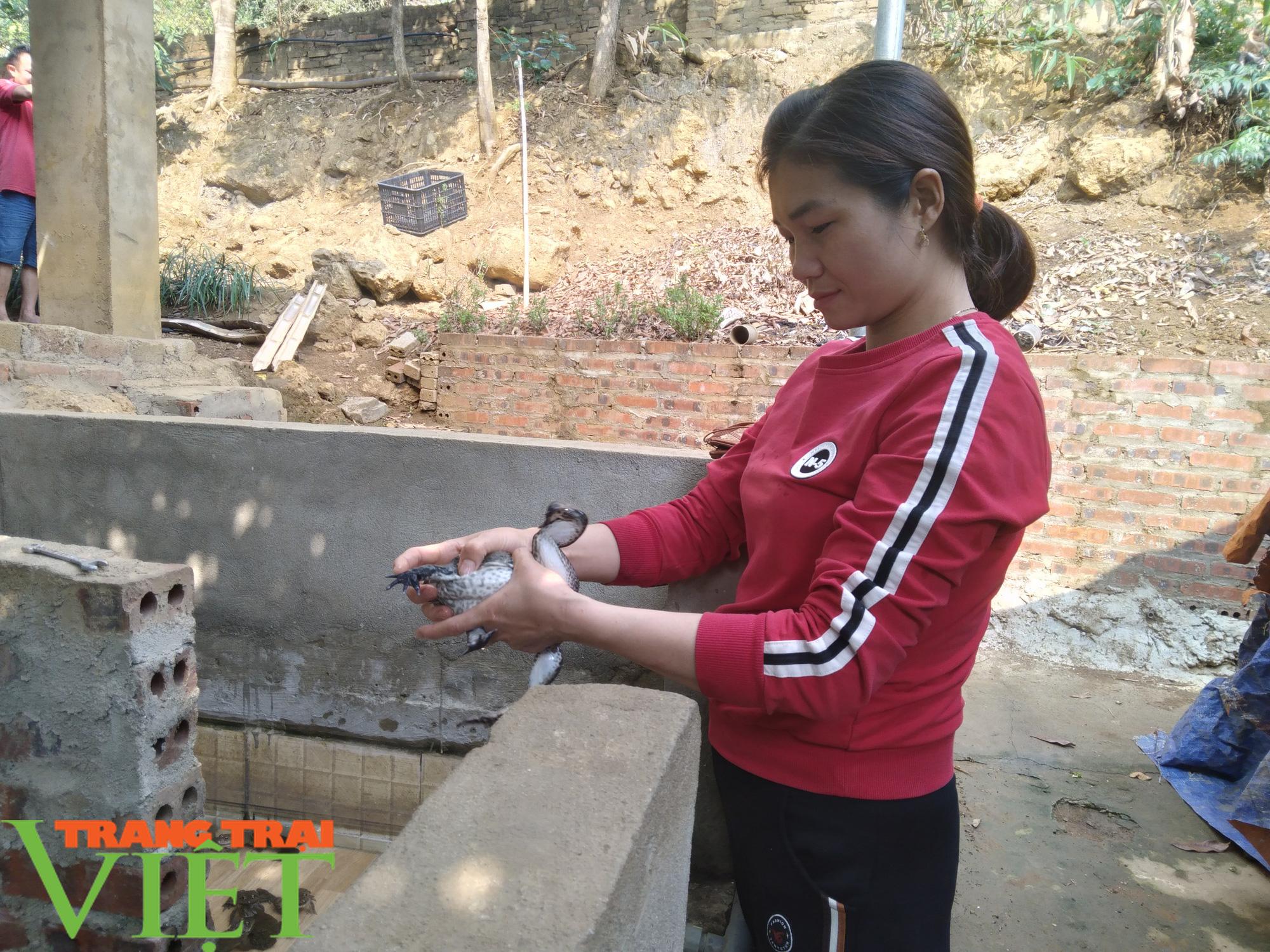 Nuôi ếch kết hợp trồng nấm sò, hội viên nông dân bỏ túi trên trăm triệu mỗi năm - Ảnh 1.
