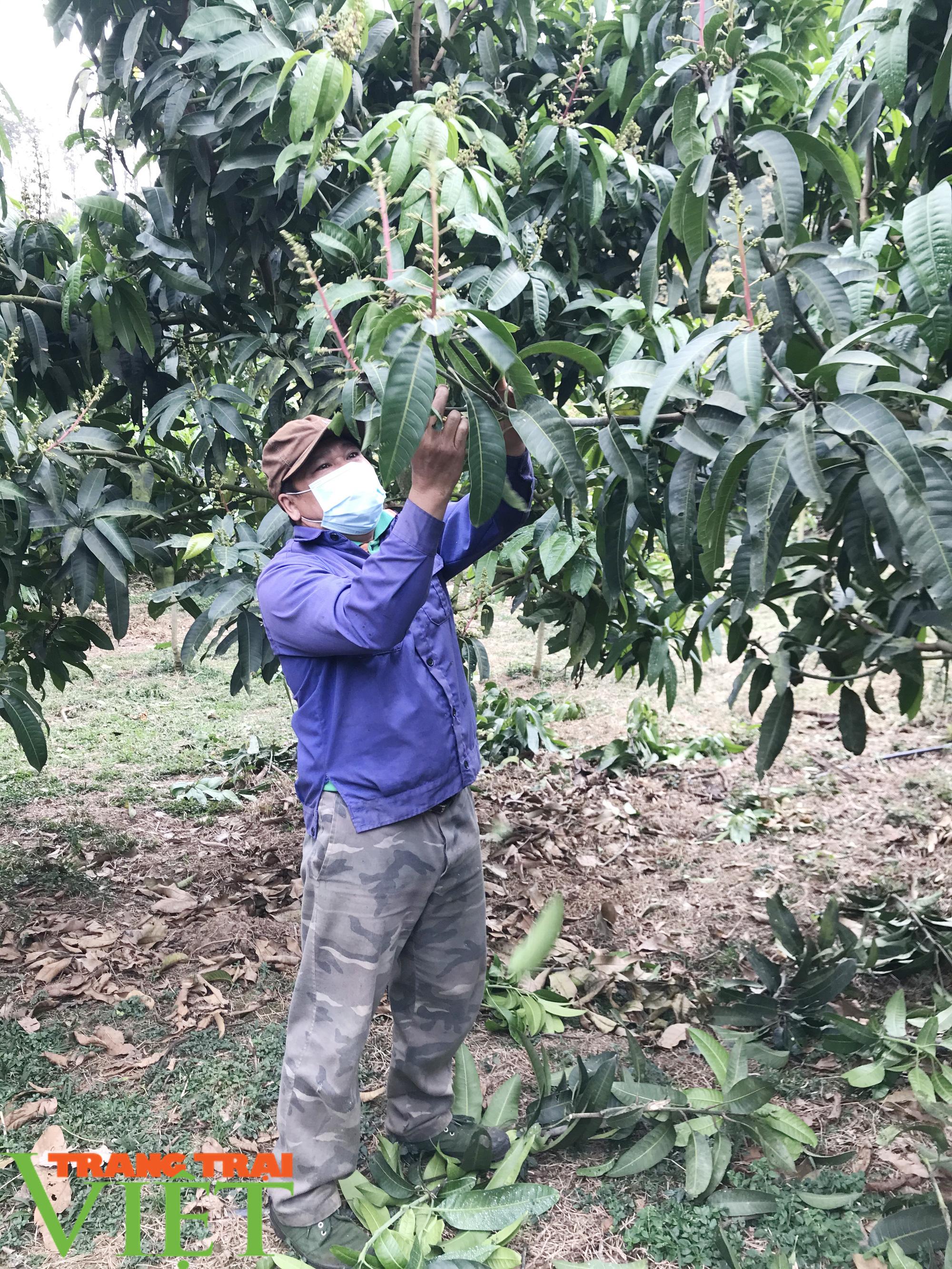 Rủ nhau học trồng cây ăn quả, cả bản thoát nghèo - Ảnh 1.