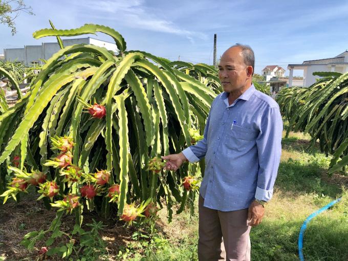 Trung Quốc đặt mua nhiều, giá loại quả nhiều tai, chi chít hạt bất ngờ tăng giá mạnh - Ảnh 1.
