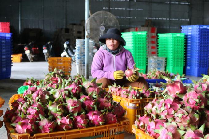Trung Quốc đặt mua nhiều, giá loại quả nhiều tai, chi chít hạt bất ngờ tăng giá mạnh - Ảnh 3.