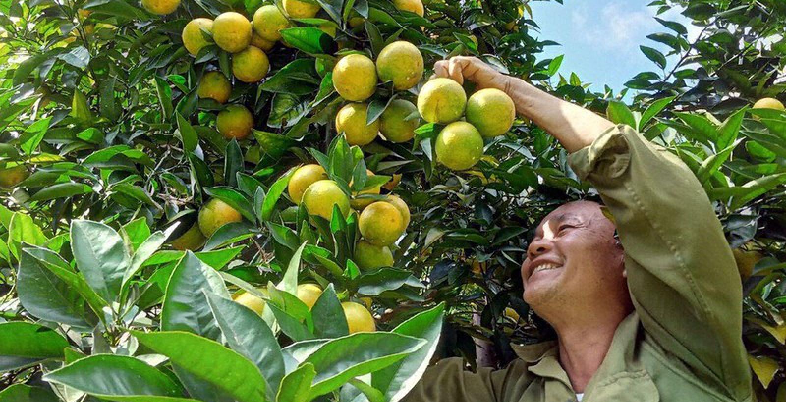 Tăng trưởng GRDP ngành nông nghiệp Sơn La cao hơn 55% so với trung bình của cả nước - Ảnh 2.