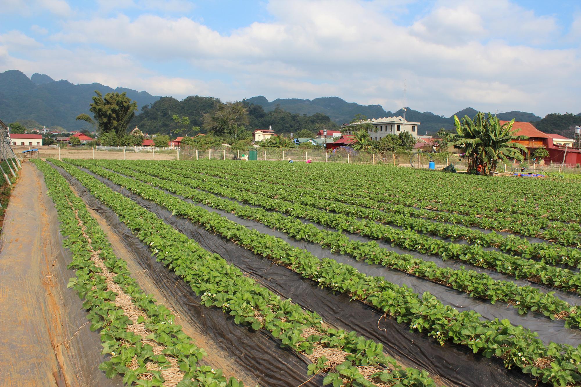 Tăng trưởng GRDP ngành nông nghiệp Sơn La cao hơn 55% so với trung bình của cả nước - Ảnh 3.