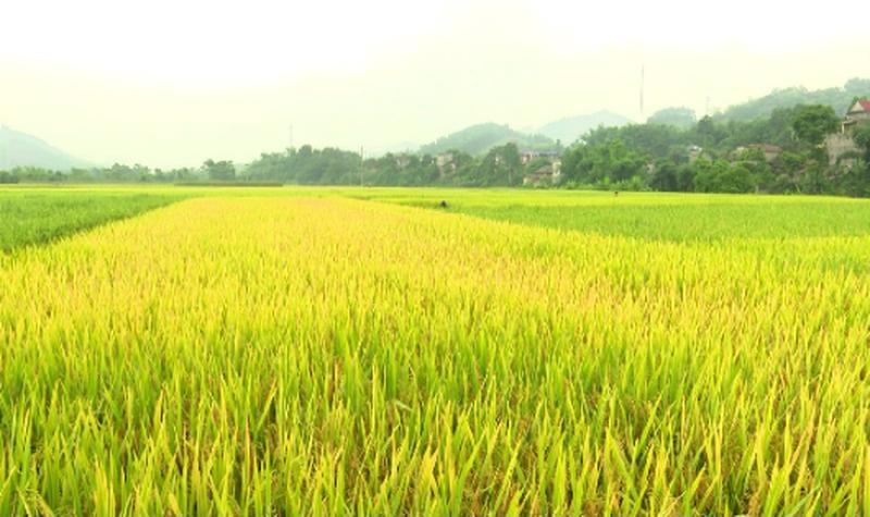 Long An: Chuyển hơn 40 ha đất trồng lúa sang phi nông nghiệp - Ảnh 1.