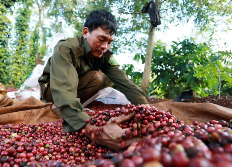 Giá nông sản hôm nay 26/2: Cà phê nhích nhẹ, tiêu đi ngang - Ảnh 1.