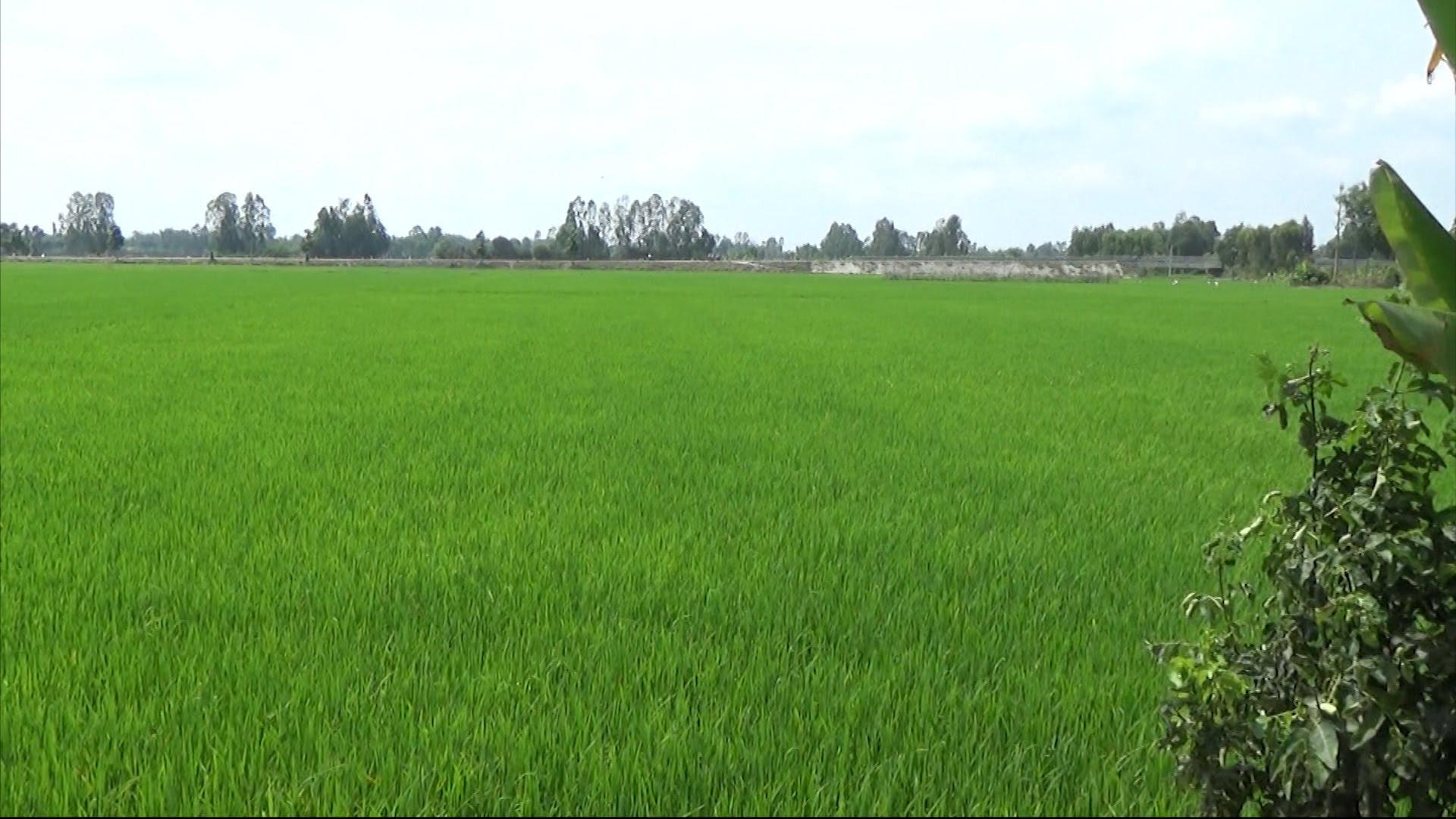 """Bắc Ninh: """"Đất lúa non"""" không sổ đỏ đắt không ngờ, giá đất nông nghiệp ở mức cao - Ảnh 3."""