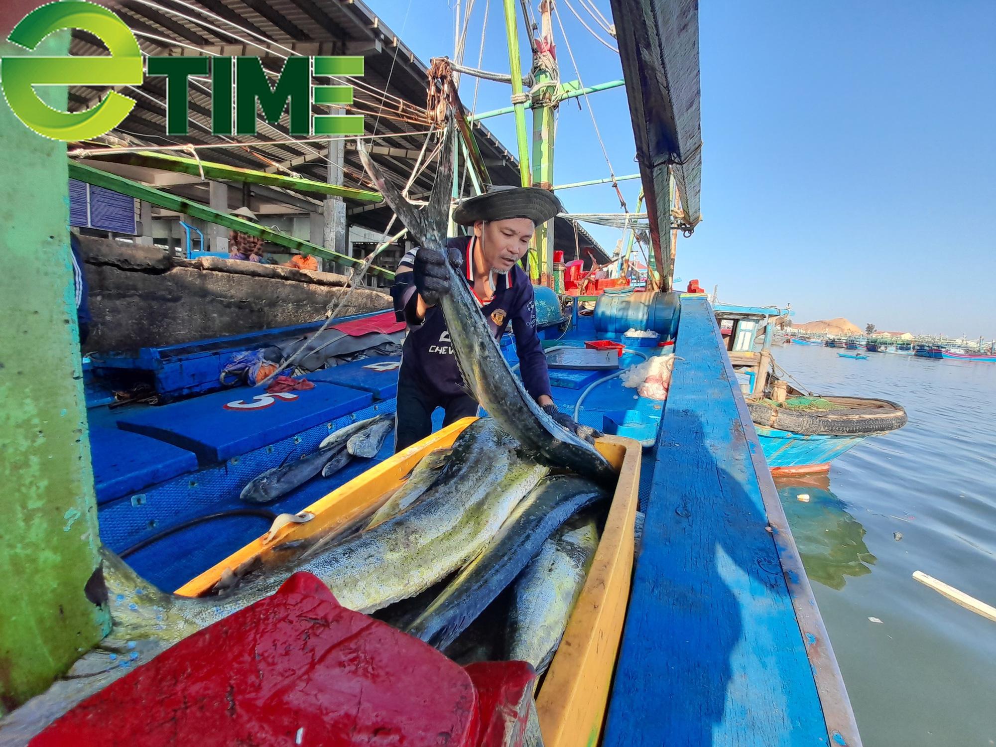 """Ngư dân Bình Định tiết lộ tin vui """"bất ngờ"""" với chuyến biển đầu năm  - Ảnh 2."""