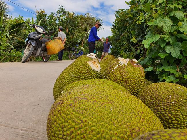 """Đổ xô trồng mít Thái, vì sao Cục Trồng trọt khẳng định không nên """"ác cảm"""" chuyện trồng - chặt? - Ảnh 3."""