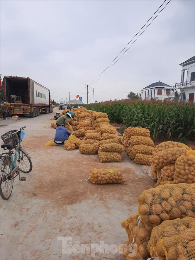 Khoai tây được mùa được giá, nông dân Nghệ An phấn khởi thu hoạch - Ảnh 10.