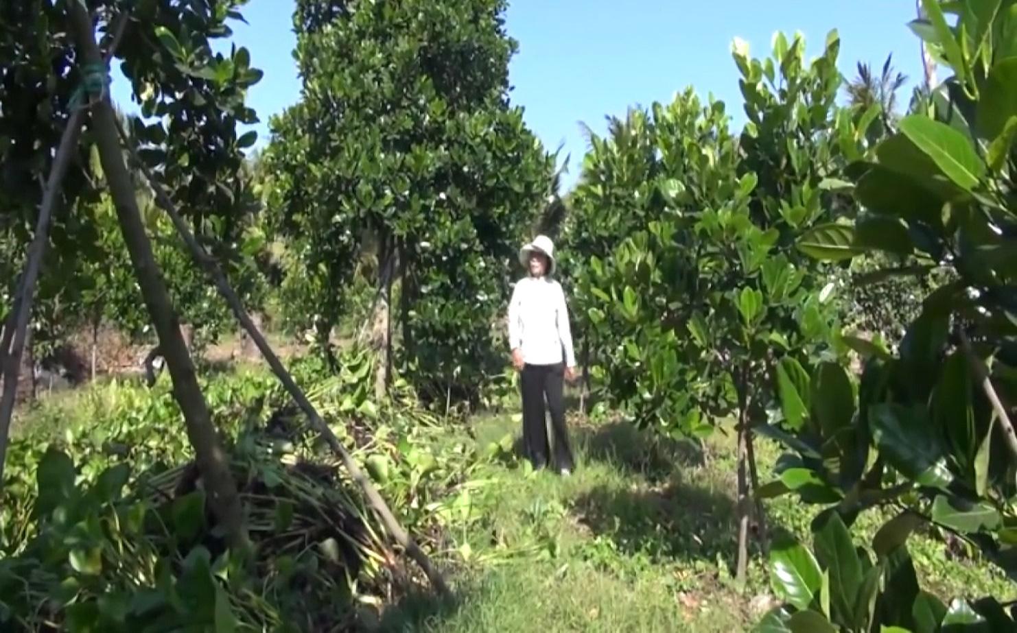 An Giang: Chuyển đổi trồng mít Thái siêu sớm, nhiều nông dân Tân Châu thoát nghèo, ổn định cuộc sống - Ảnh 2.