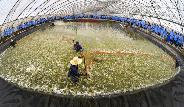 Bình Định triển khai quy hoạch khu nông nghiệp công nghệ cao hơn 2.000 tỷ đồng - Ảnh 1.