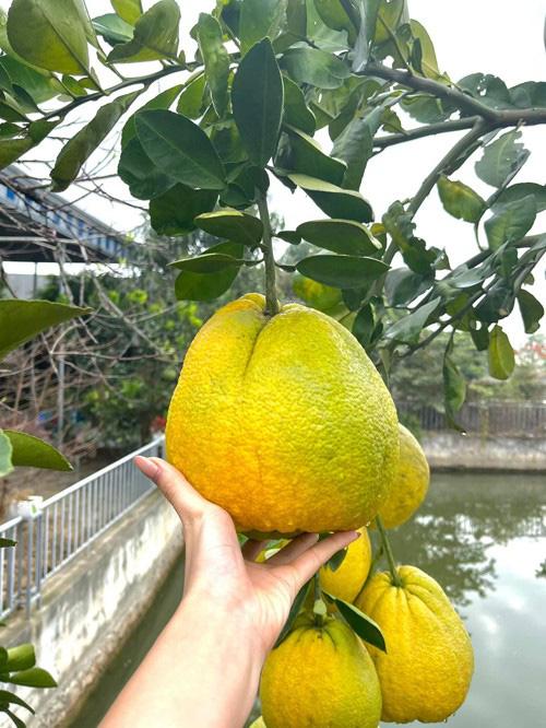 Phát ghen vì vườn rau xanh tốt um, hoa trái lủng lẳng của hoa hậu Việt Nam Đỗ Thị Hà - Ảnh 4.