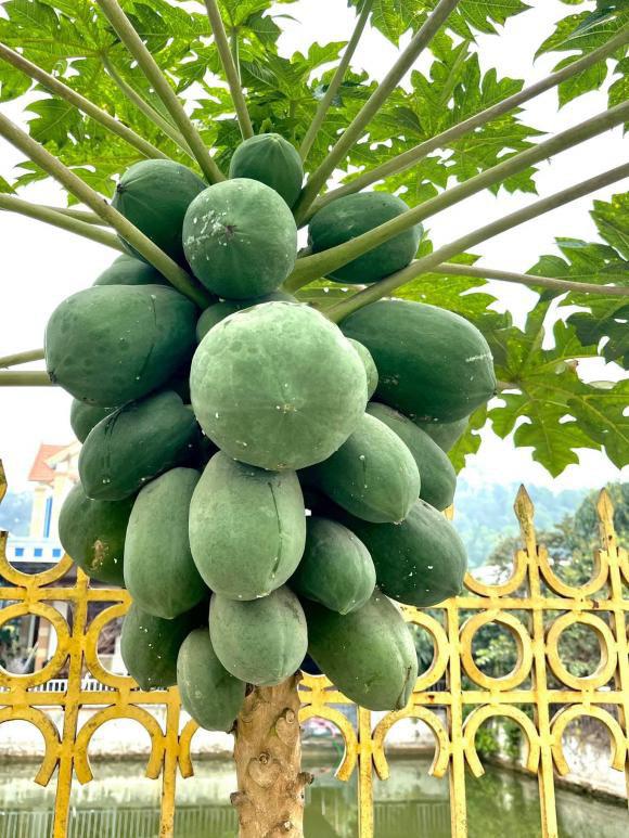 Phát ghen vì vườn rau xanh tốt um, hoa trái lủng lẳng của hoa hậu Việt Nam Đỗ Thị Hà - Ảnh 5.