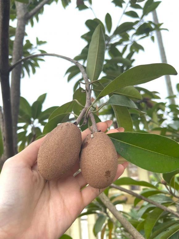 Phát ghen vì vườn rau xanh tốt um, hoa trái lủng lẳng của hoa hậu Việt Nam Đỗ Thị Hà - Ảnh 6.