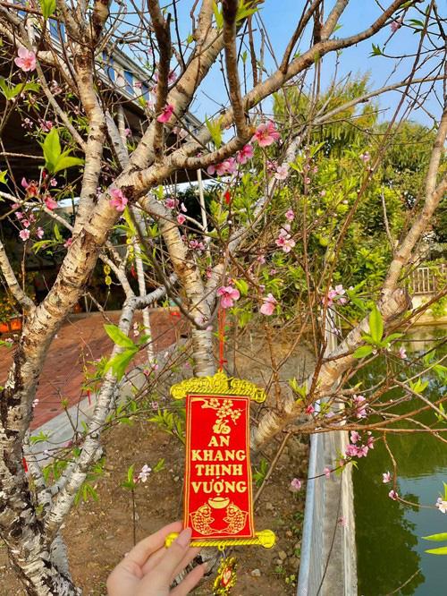 Phát ghen vì vườn rau xanh tốt um, hoa trái lủng lẳng của hoa hậu Việt Nam Đỗ Thị Hà - Ảnh 7.