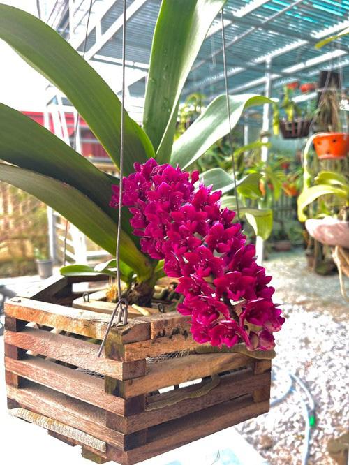 Phát ghen vì vườn rau xanh tốt um, hoa trái lủng lẳng của hoa hậu Việt Nam Đỗ Thị Hà - Ảnh 8.