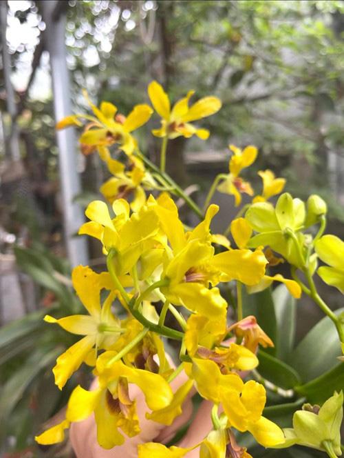 Phát ghen vì vườn rau xanh tốt um, hoa trái lủng lẳng của hoa hậu Việt Nam Đỗ Thị Hà - Ảnh 9.