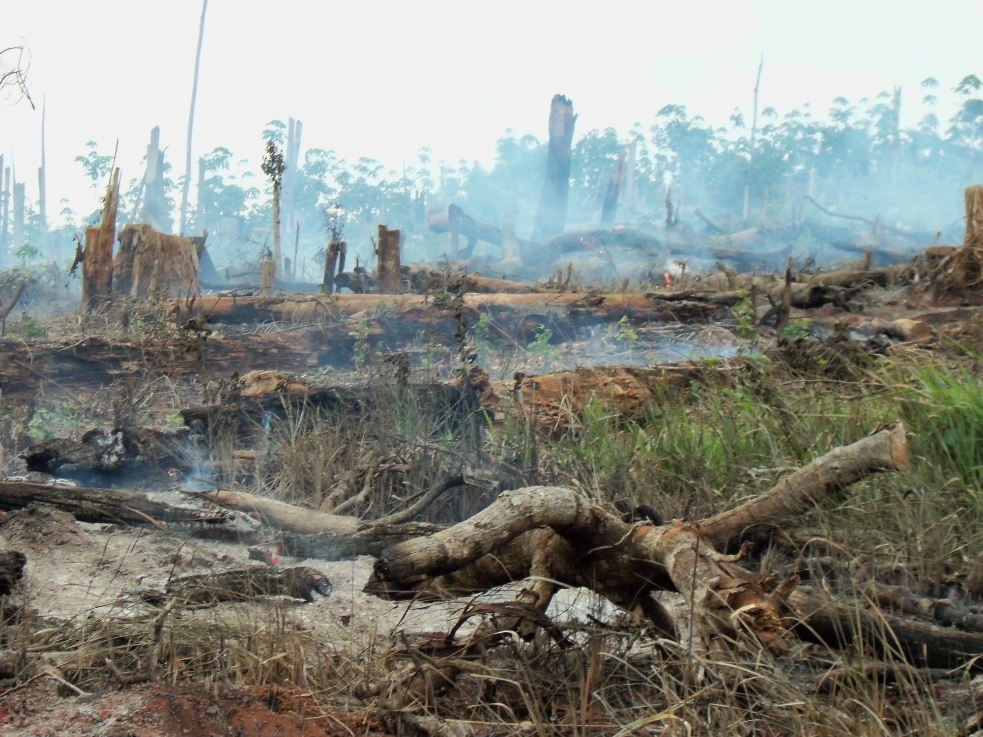 Đắk Lắk: Điều tra vụ thiếu trách nhiệm để mất hơn 22 nghìn ha rừng  - Ảnh 2.