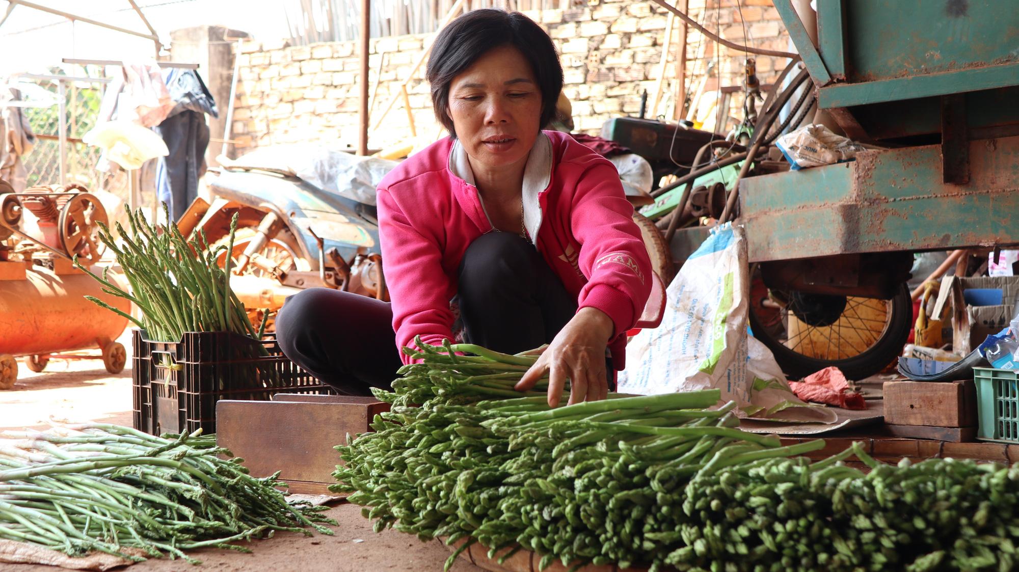 Đánh liều phá cà phê trồng măng tây, mỗi ngày thu 400kg, bán cho thương lái 60.000 đồng/kg - Ảnh 7.