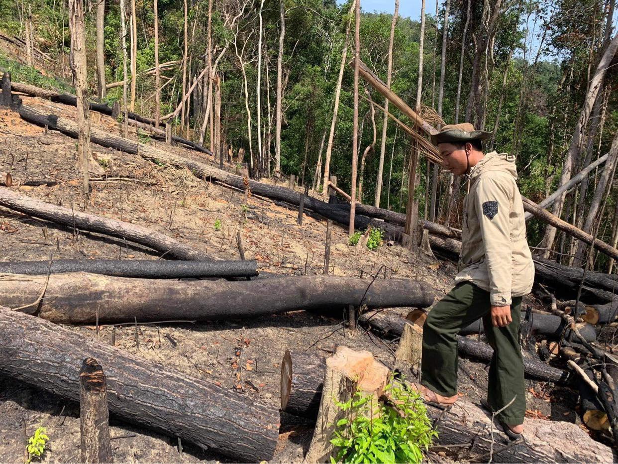 Đắk Lắk: Điều tra vụ thiếu trách nhiệm để mất hơn 22 nghìn ha rừng  - Ảnh 1.