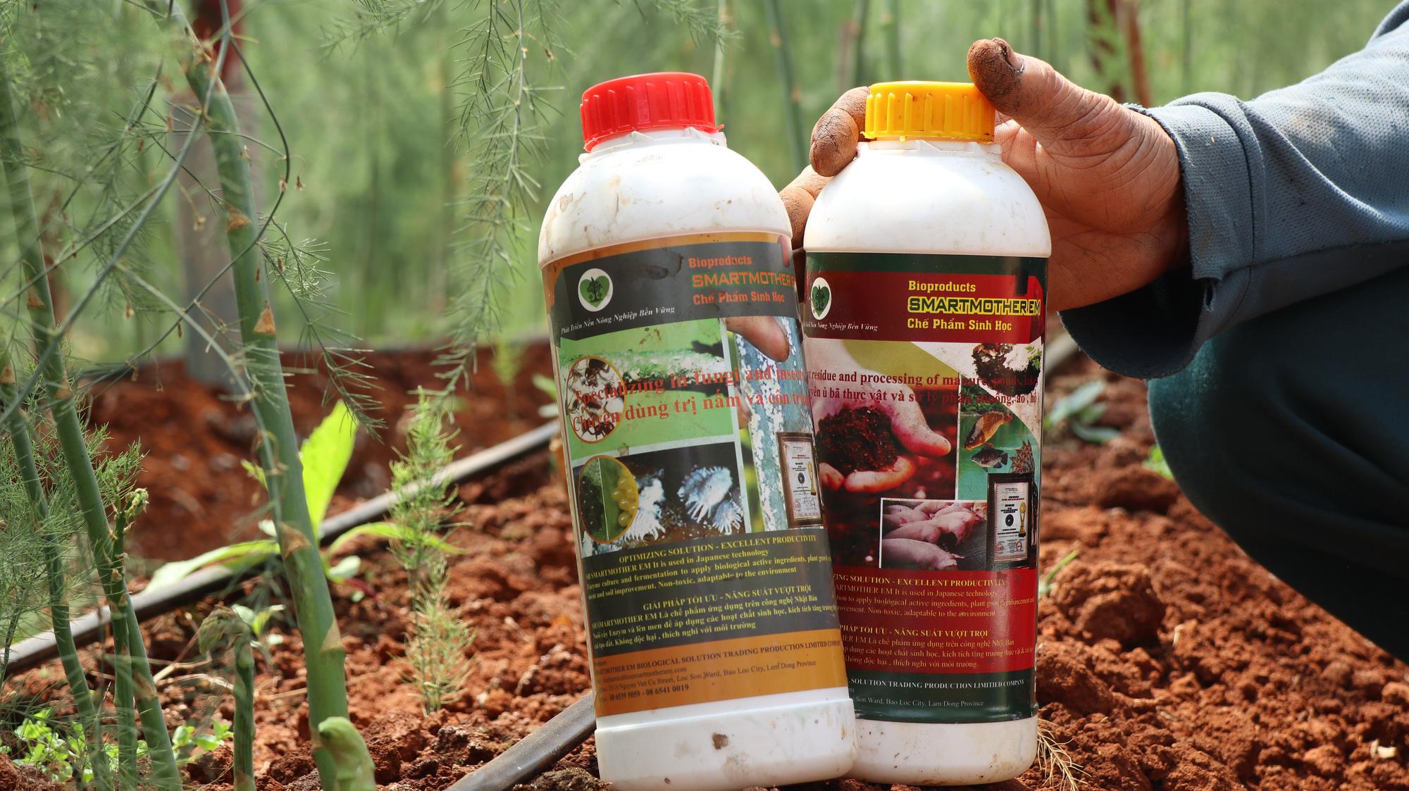 Đánh liều phá cà phê trồng măng tây, mỗi ngày thu 400kg, bán cho thương lái 60.000 đồng/kg - Ảnh 6.
