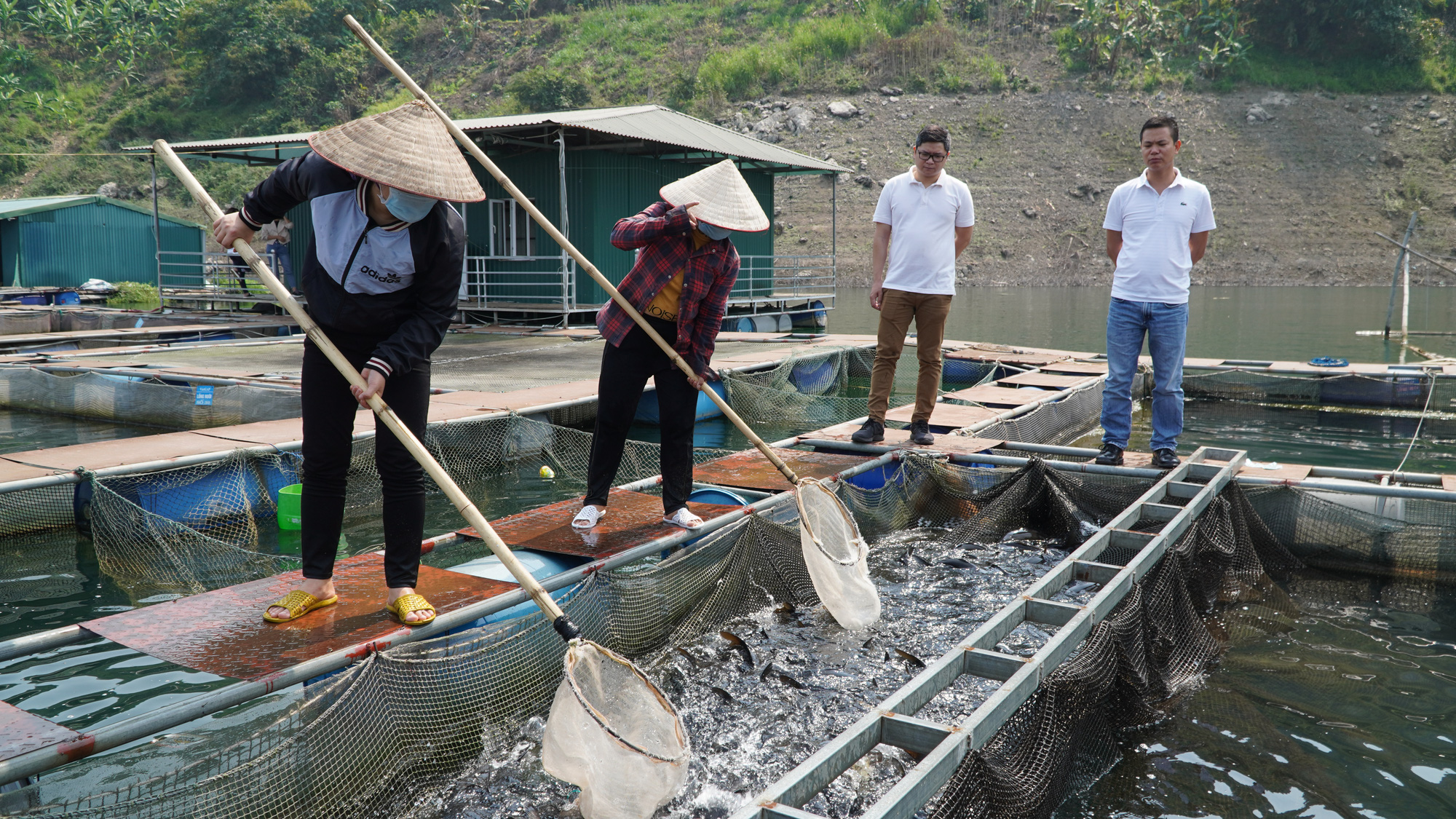 Thu 40 tỷ nhờ nuôi cá đặc sản trên lòng hồ  - Ảnh 4.