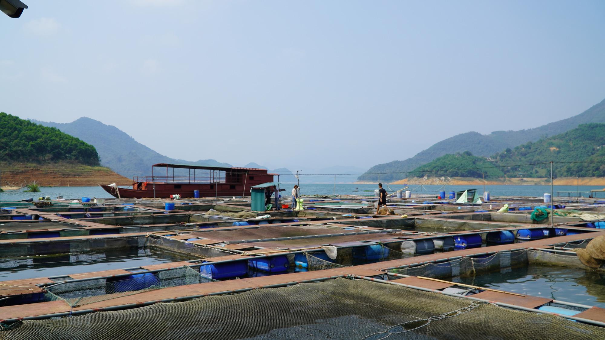 Thu 40 tỷ nhờ nuôi cá đặc sản trên lòng hồ  - Ảnh 2.