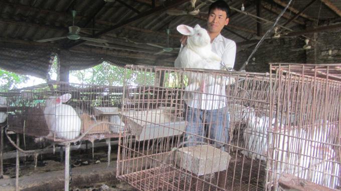 Kinh nghiệm nuôi 3.000 thỏ lãi 700 triệu đồng/năm - Ảnh 1.