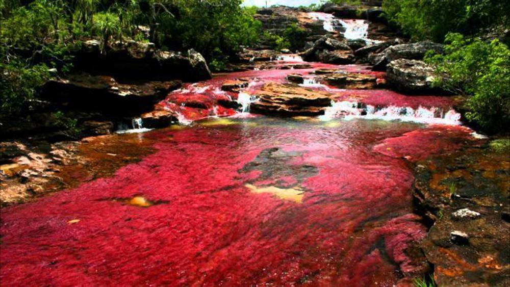Sửng sốt trước vẻ đẹp của dòng sông ngũ sắc  - Ảnh 8.