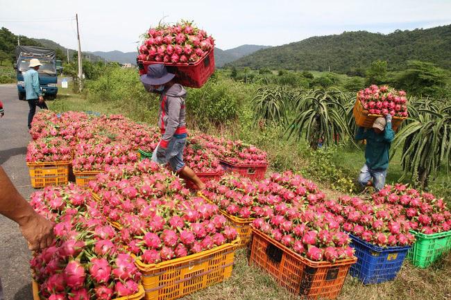Rau quả Việt Nam xuất khẩu mạnh sang Thái Lan  - Ảnh 1.
