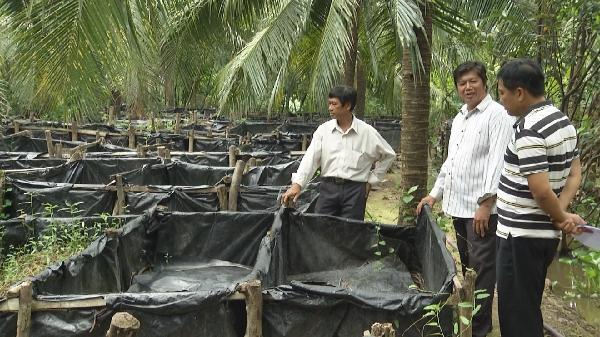 Bến Tre: Nuôi lươn đồng bán giống dưới tán vườn dừa, ông nông dân này giàu hẳn lên