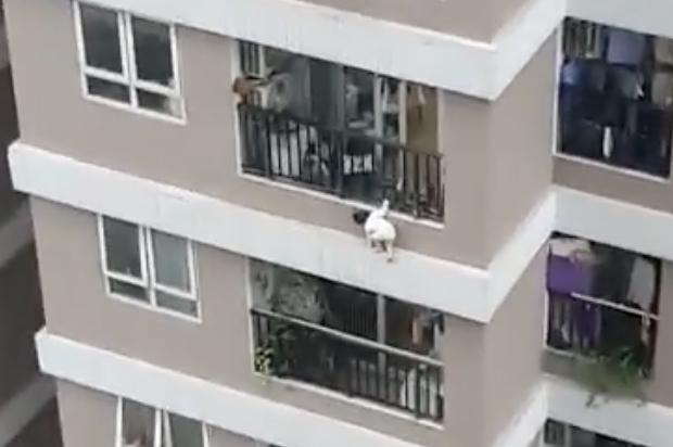 Người hùng cứu bé gái rơi từ tầng 13: Tôi hoảng sợ vô cùng! - Ảnh 3.