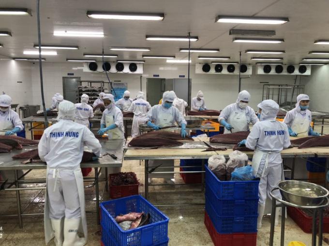 Xuất khẩu cá ngừ đại dương khởi sắc - Ảnh 1.